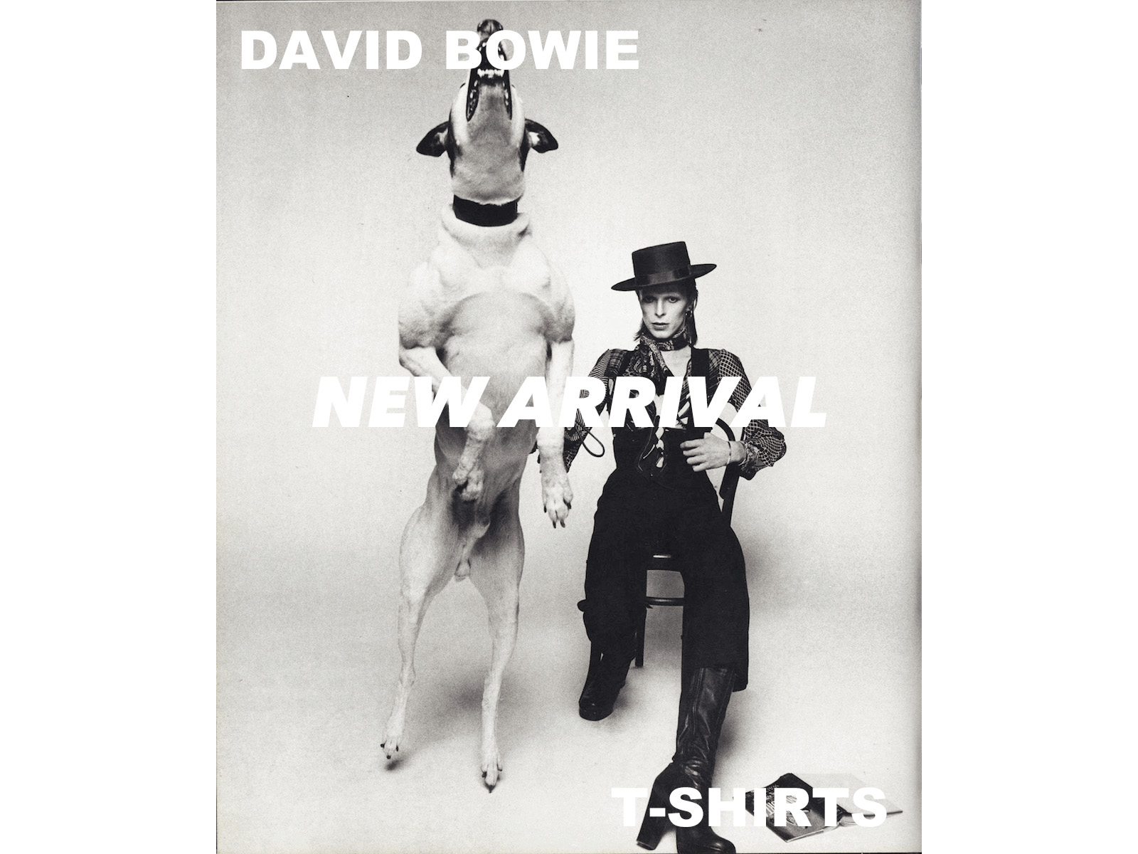 NEW ARRIVAL – DAVID BOWIE / T-SHIRTS