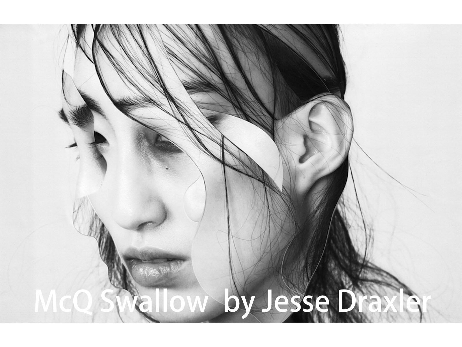 McQ Swallow by Jesse Draxler