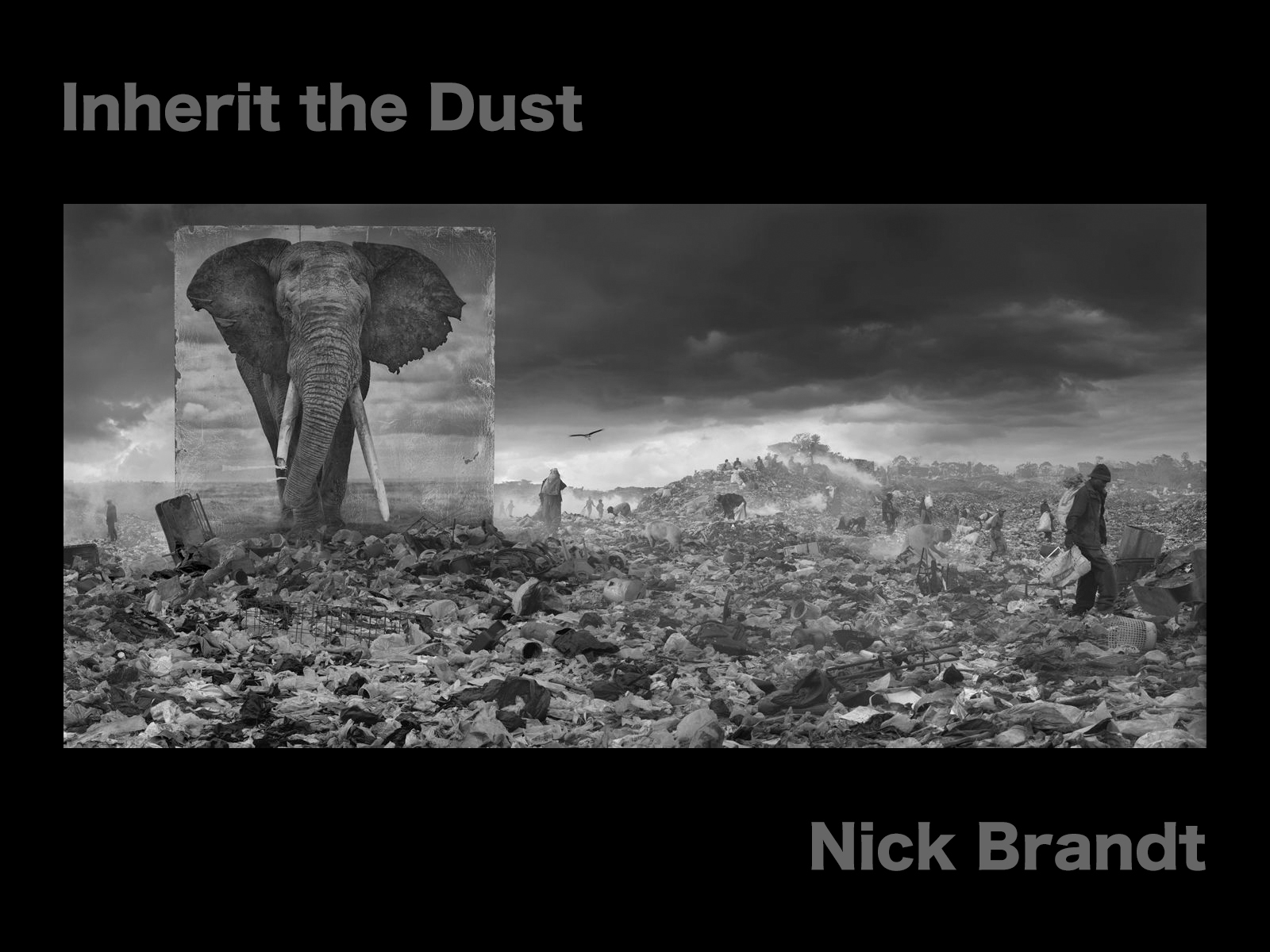 NICK BRANDT – Inherit the Dust